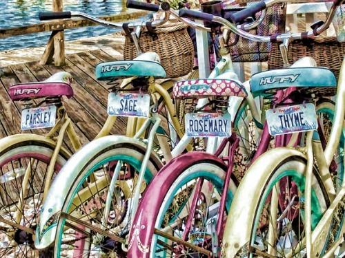 Beaufort_Culnary_Bike_Tour_Hungry_Town_Tours_500x375