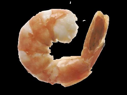 Shrimp_600