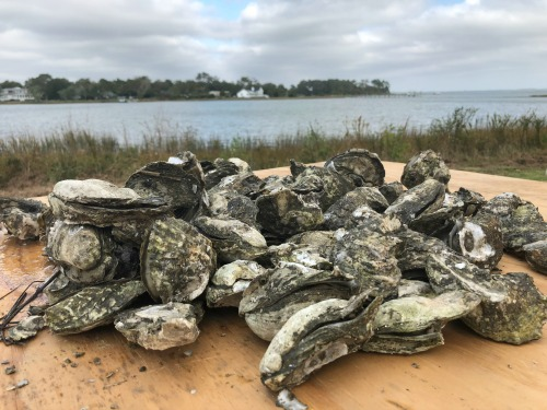 Annual_Oyster_Roast_Beaufort_Wine_and_Food_November_500x375